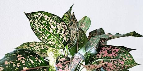 Brisbane  - Huge Indoor Plant Warehouse Sale - Rare Plant Party tickets