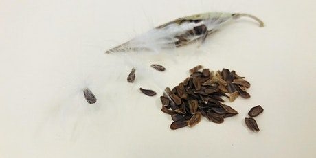 Collect + Clean Milkweed Seed from the Santa Monica Mountains tickets