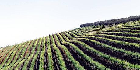 Italiensk vinprovning Stockholm | Södermalms vinateljé Den 27 October tickets