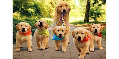 Pet Parade 2021 w/ Webster Animal Shelter tickets
