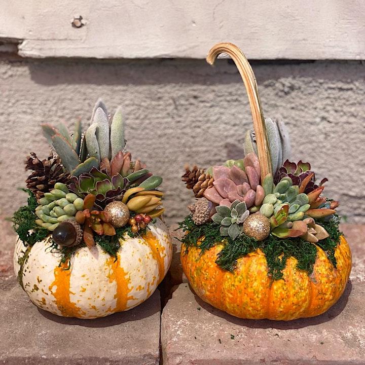 Succulent Pumpkin Workshop image
