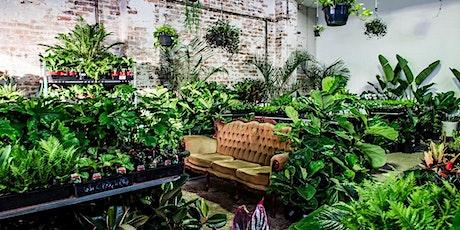 Canberra  Virtual Pop-up shop - Huge Indoor Plant Sale entradas