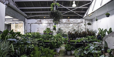 Sydney Virtual Pop-up shop - Huge Indoor Plant Sale entradas