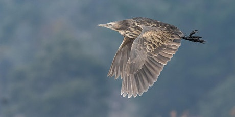 Australasian Bittern Identification and Call Recognition Webinar tickets