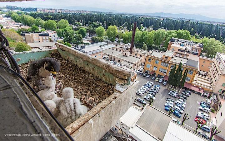 Immagine Presentazione libro Wild Rome, la fauna selvatica della Città Eterna.