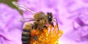 Bringing Bees back to Scotland
