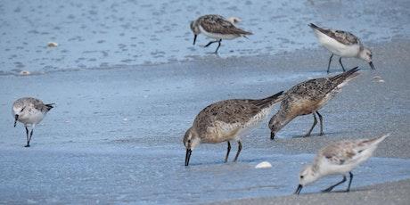 Shorebird Identification Presentation & Walk tickets