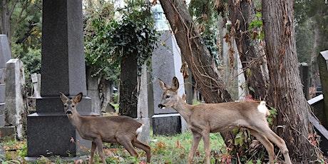 Entdecke den Zentralfriedhof: Die Führung tickets