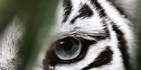 Eye Of A Tiger Workshop, Brunch, and Dolphin Show. tickets