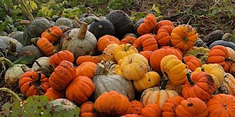 Halloween Harvest Samhain Celebration! tickets