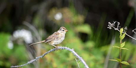 Gardening for Birds – Toronto's next big conservation opportunity tickets