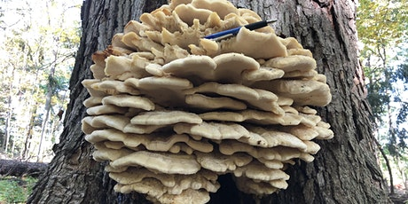 Mushroom and Fungi Walk at McMaster Forest tickets