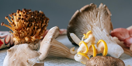 MYCOTA: Grow Your Own Mushrooms Workshop tickets
