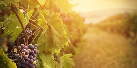 Celebrating Fall in the Vineyard tickets