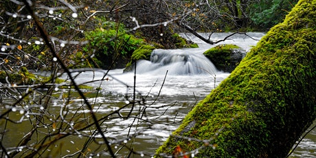 2021 Water Efficiency Workshop featuring Tasha McKee of Sanctuary Forest tickets