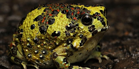 A photographic journey of Australia's amazing frogs with Dr Simon Clulow billets