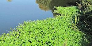 Rivers and Land Management Workshop: Invasive...