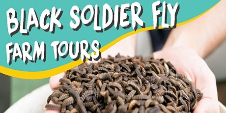 Insect Farm Tour tickets
