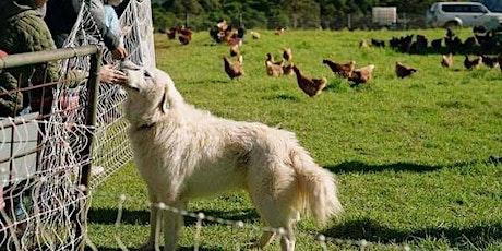 Family Friendly Farm Tour tickets