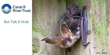 World Mental Health Day, boost your wellbeing with a Bat Talk and Walk. tickets