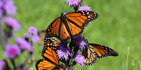 Flight of the Monarchs (and Other Midsouth Butterflies) tickets