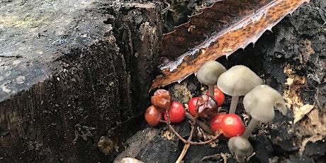 Little Rotter's Mushroom March tickets
