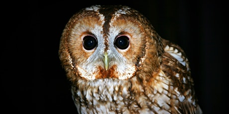 Owl Prowl in Leigh Woods for families tickets