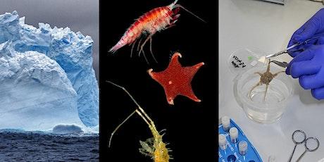Analisi del DNA in organismi marini antartici biglietti