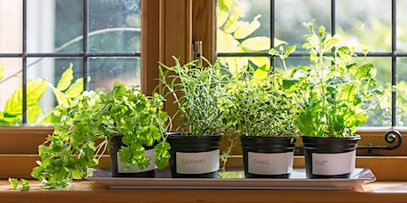 Grow Your Own: Window Sill tickets