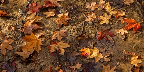 Fall Colors Hike at the Bamberger Ranch Preserve tickets