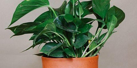Fall Plant Care - Indoor Plants tickets