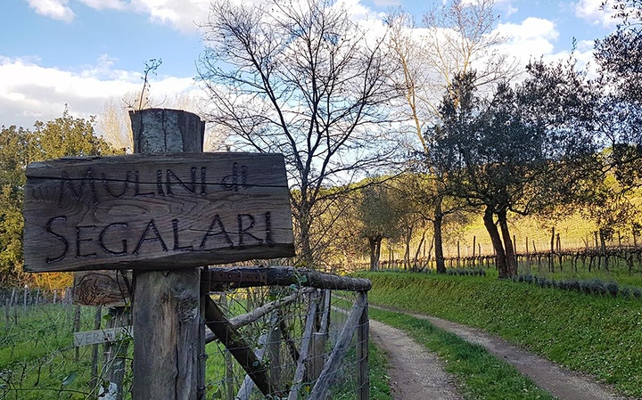 Immagine Oil&Wine - 7K Walk (Super Tuscan Ecomarathon)