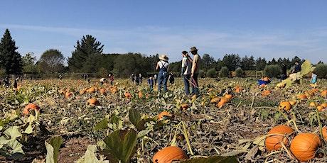 SRJC Shone Farm Pumpkin U-Pick tickets