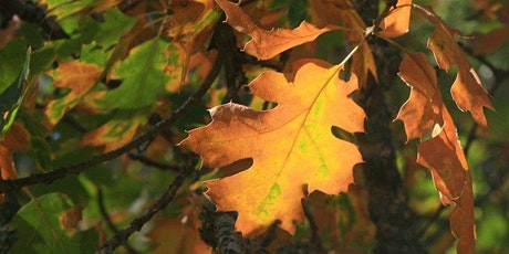 Discover Autumn with Nature Journaling tickets