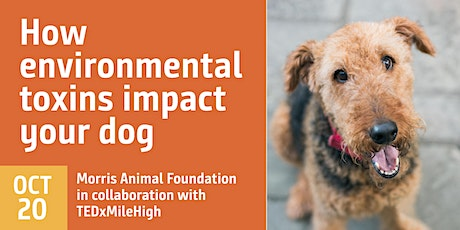 How environmental toxins impact your dog tickets