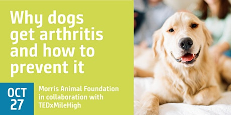 Why dogs get arthritis and how to prevent it tickets