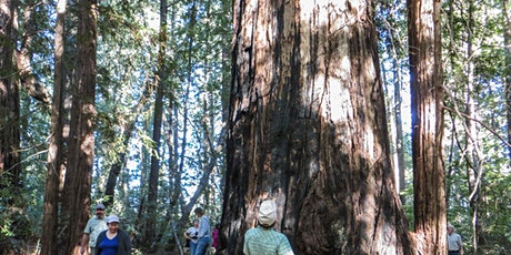 Guided Virtual Hike: Buckeye and Howlett Forests 10-19-21 tickets