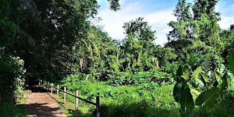 Rubber & Rambutan - Exploring Windsor Nature Park tickets