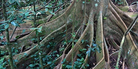 Up Hill and Down Dale - Nature Walk at Bukit Timah tickets