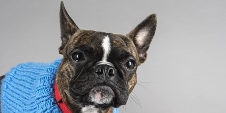 Pet Portrait Event (Tauranga) - A day to remember for you & your pet tickets