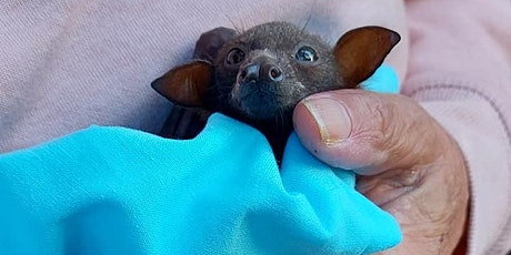 Batty weekend in Yeppoon - Orphan flying fox care with Connie tickets