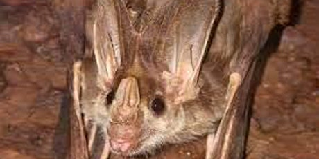 Batty weekend in Yeppoon - micro bat habitat and box construction with John tickets