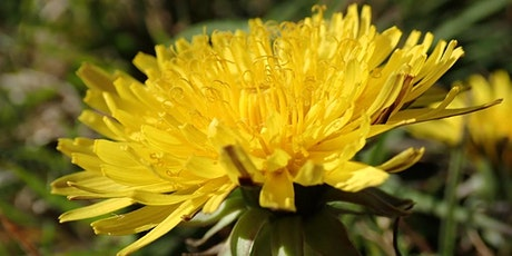 Botanical Taxonomy and the Naming of things tickets