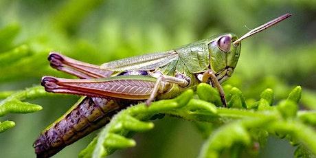 Grasshopper  Class - Parent Consultation Evening tickets