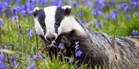 Badger Class - Parent Consultation Evening tickets