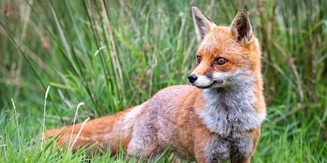 Fox Class - Parent Consultation Evening tickets