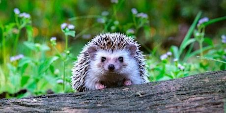 Hedgehog Class - Parent Consultation Evening tickets