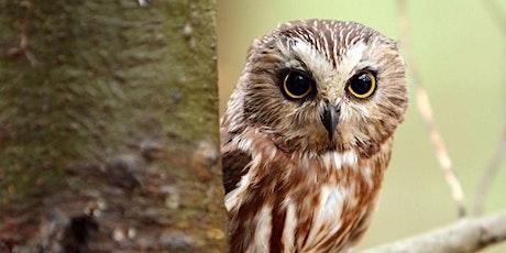 Owl Class - Parent Consultation Evening tickets
