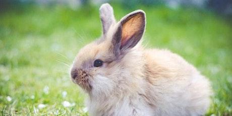 Rabbit Class - Parent Consultation Evening tickets