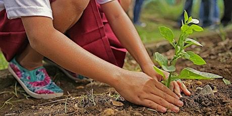 Plantation participative billets